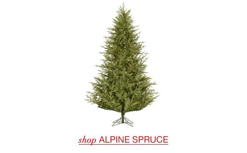 Alpine Spruce