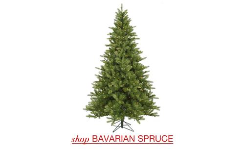 Bavarian Spruce