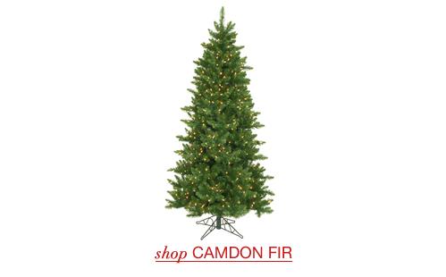 Camdon Fir
