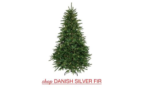 Danish Silver Fir