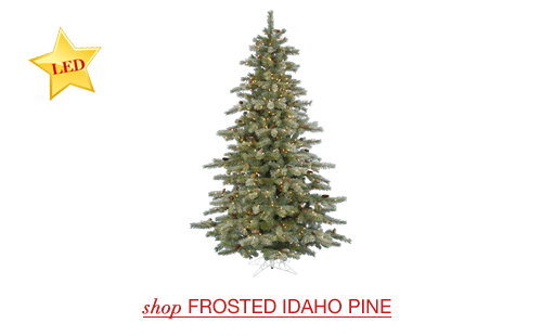 Frosted Idaho Pine