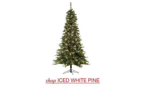 Iced White Pine