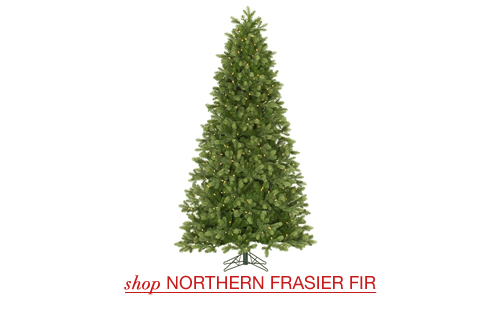 Northern Frasier Fir