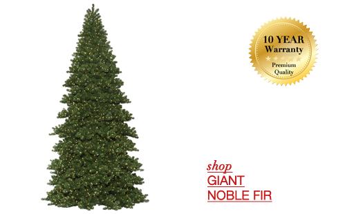 Giant Noble Fir