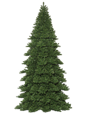 Giant Noble Fir