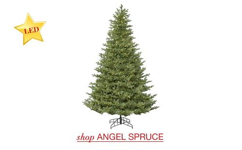 Angel Spruce