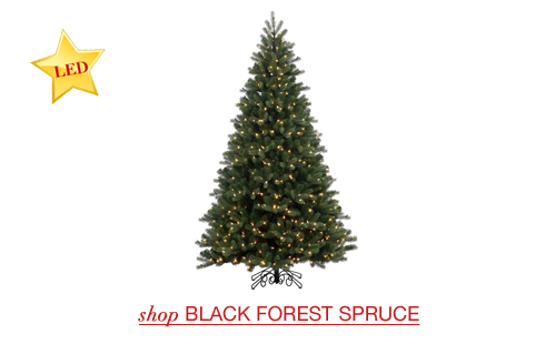 Black Forest Spruce