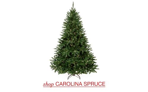 Carolina Spruce