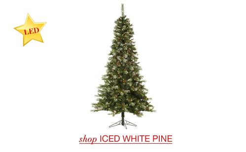 Iced White Pine