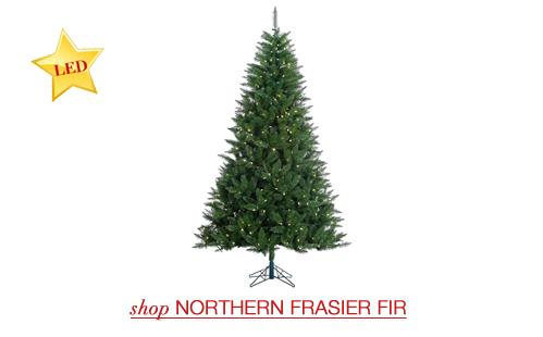 Northern Frasier Fir