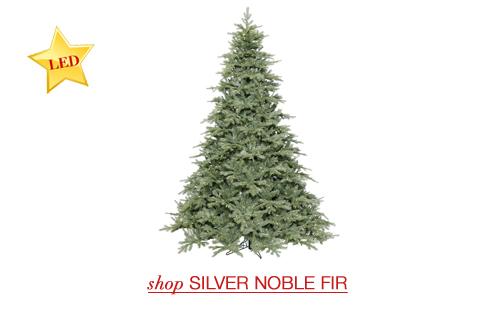 Silver Noble Fir
