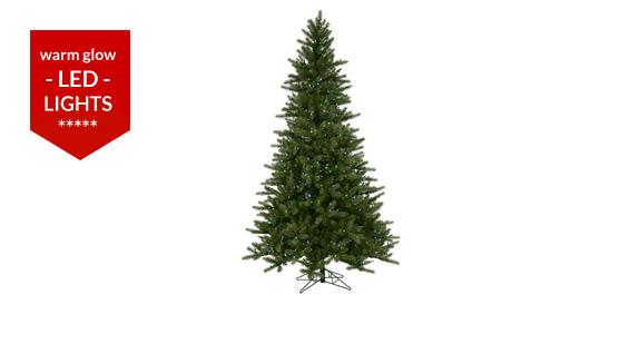 Tannenbaum Spruce