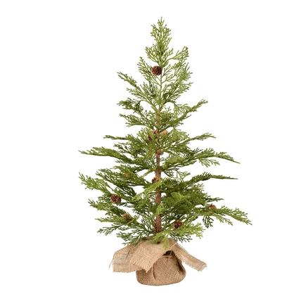 2' Alpine Red Cedar