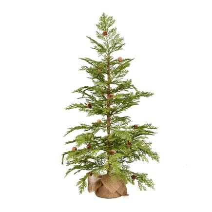 3' Alpine Red Cedar