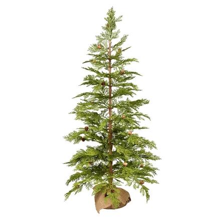 4' Alpine Red Cedar