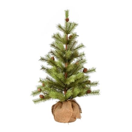 2' Dwarf Pine