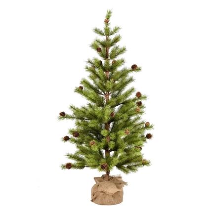 3' Dwarf Pine