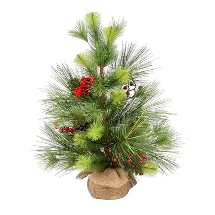 2' Monterey Pine