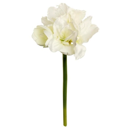 "Amaryllis Flower 26"" Set of 12 Cream"