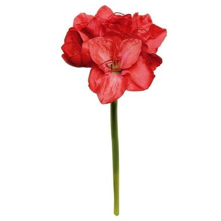 """Amaryllis Flower 26"""" Set of 12 Red"""