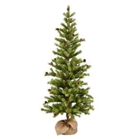 4' Dwarf Pine